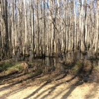 Dillon Inland Port Mitigation