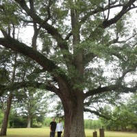 Homeplace Farm adds 348 Acres of Permanently Protected Family Farm Land in Marlboro County