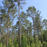 Land Management Gathering - Chesterfield, SC August 20, 2019