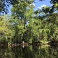 PDLT Protects Mary Longs in Horry County