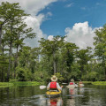 Black River Cypress Preserve Paddle- Saturday, October 10, 2020 - Sold Out with Waiting List